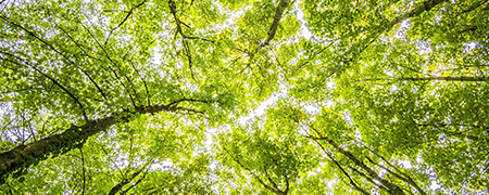 floresta.png